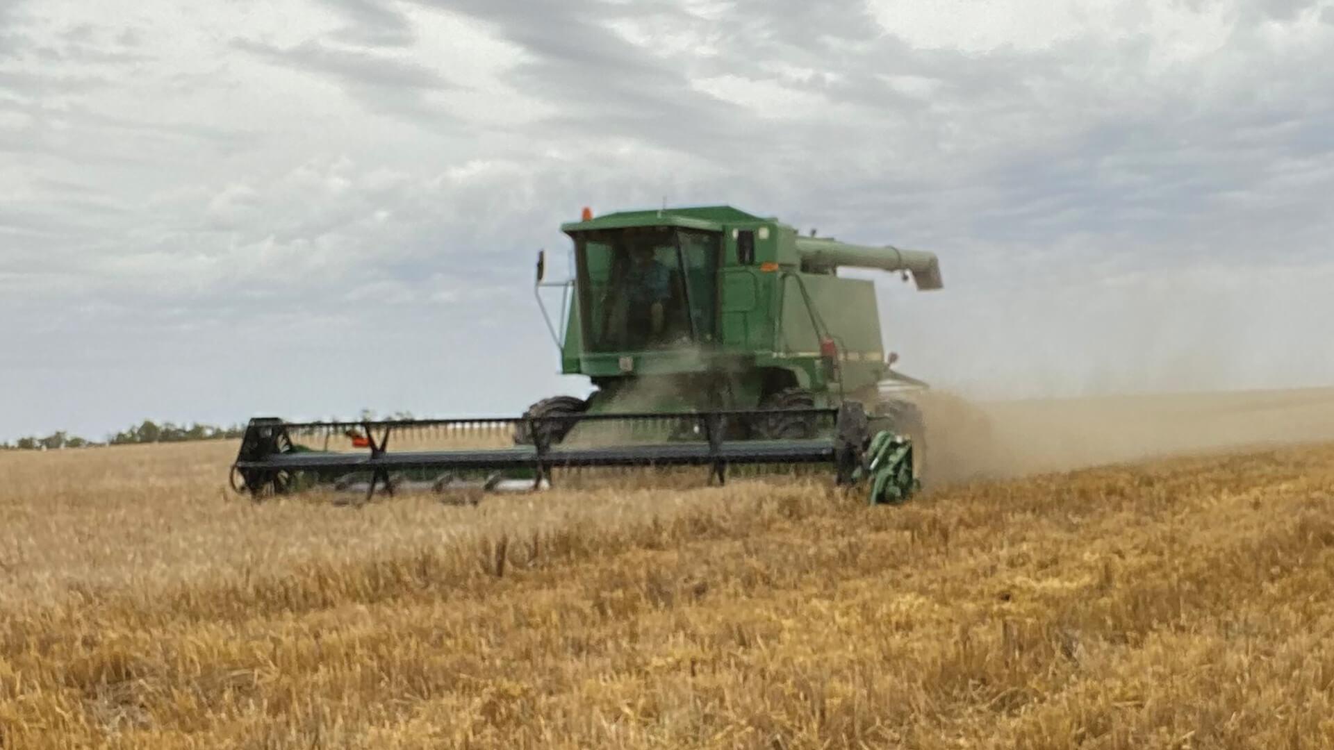 Galluzzo Produce in the Riverina harvesting wheat
