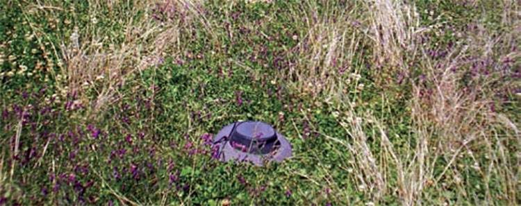 Sub and white clover have been incorporated into the native grass and medic pastures.