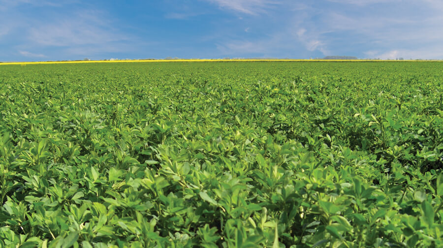 How to get more from your Lucerne