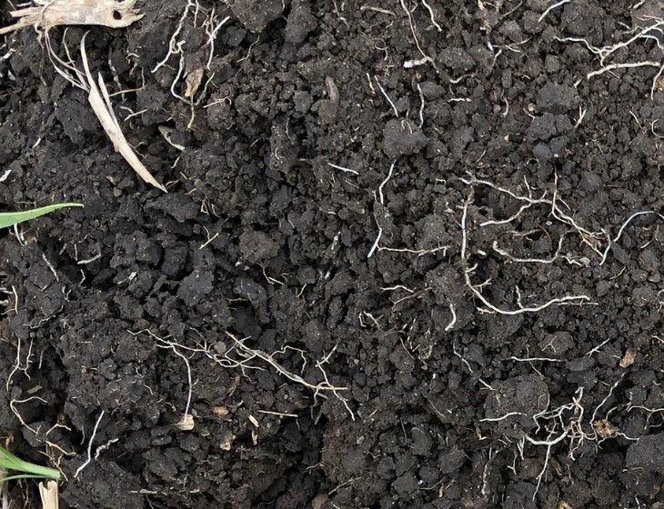 A well-aggregated soil provides many micro-habitats for soil microbes. Photo: Caley Gasch.