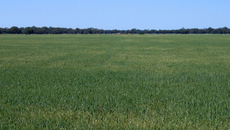 Rich mix of sub clover and grasses following corrective action utilising BioAgPhos.