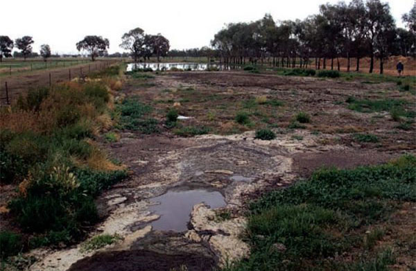 The pond before treatment with BioAg Digest-it for Dairies.
