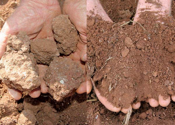 Before and after: hard clumps of soil in a conventionally-farmed paddock compared to the soft, friable soil from a paddock converted to organic farming in 1998.