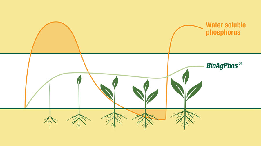 Choosing Phosphate fertiliser