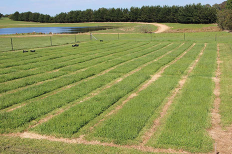 Crookwell pasture trial cuts in field