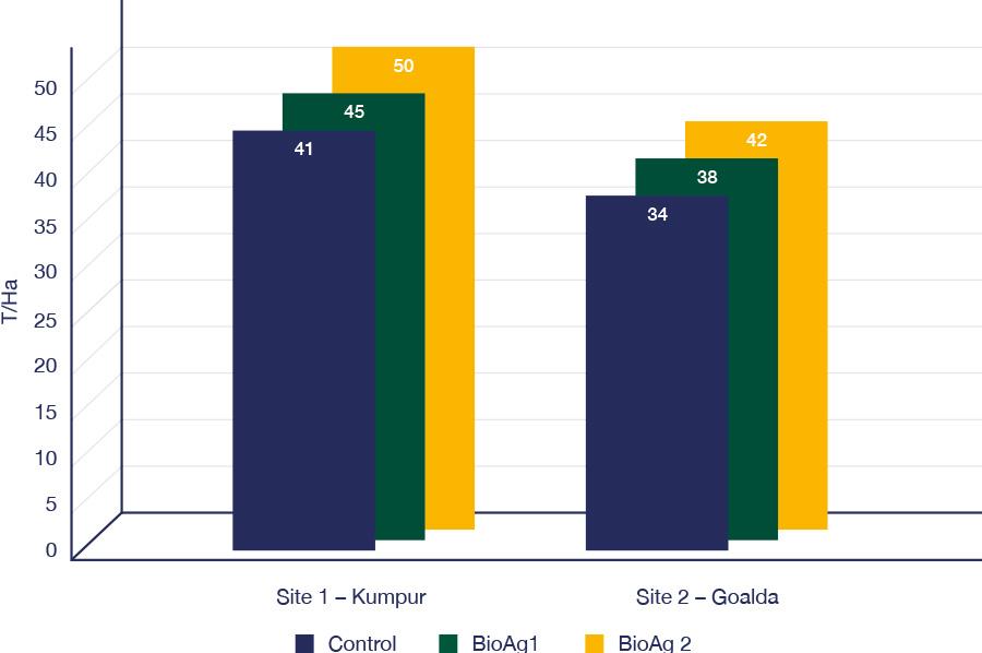 Kolkata banana trial - graph