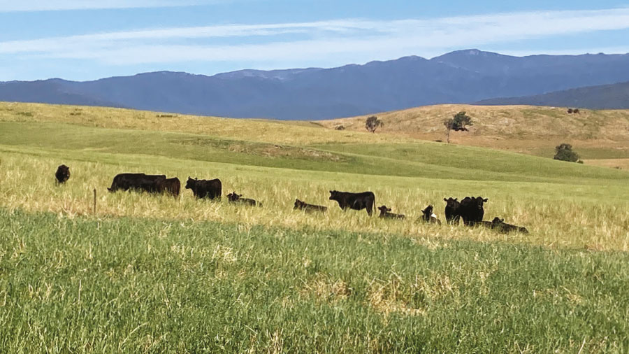 Long term customers see results in beef