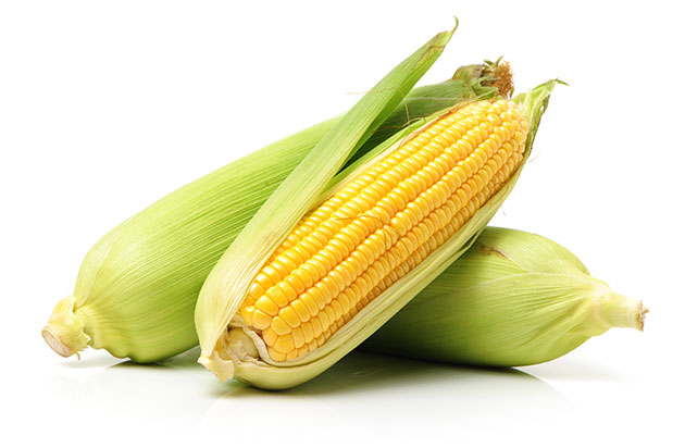 ears of corn on a white background