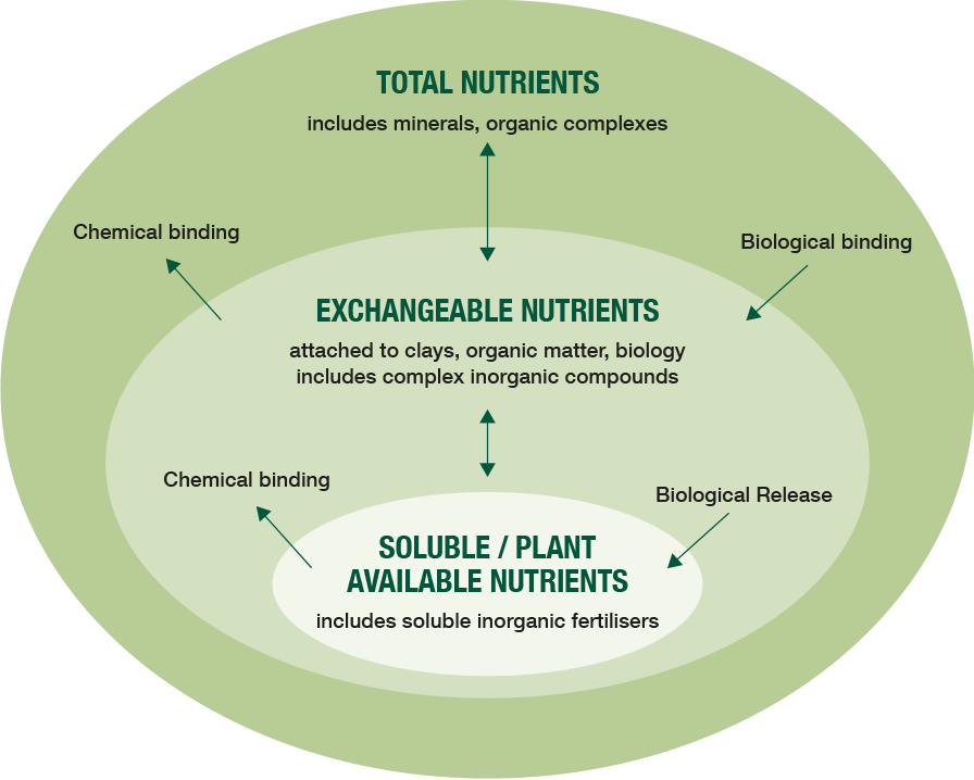 A diagram displaying nutrient pools in soil