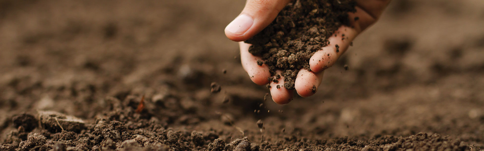 Organic carbon in soils – an opportunity to lift productivity