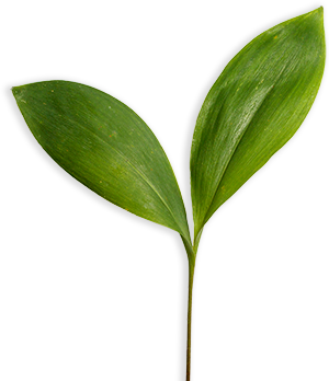Healthy plant life